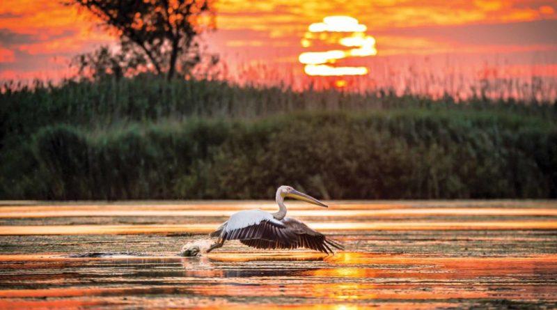 Cele mai frumoase locuri din Delta Dunarii
